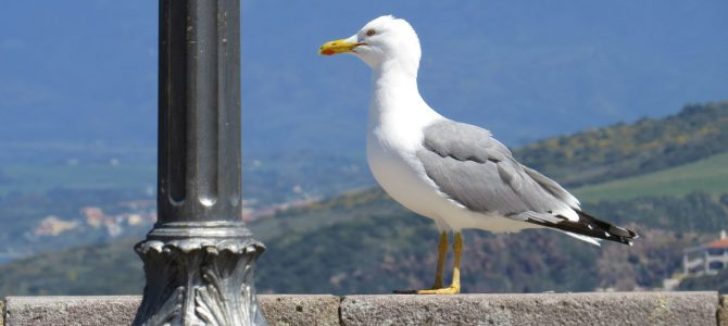 Kurztrip nach Sardinien