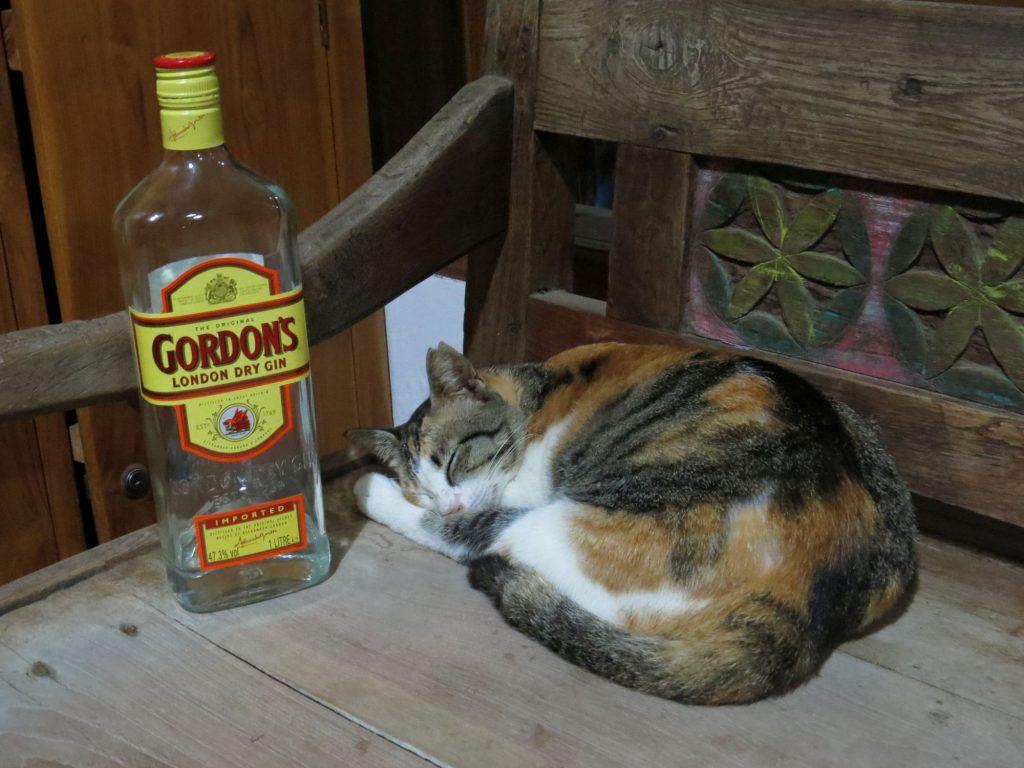 Cat Gili Trawangan