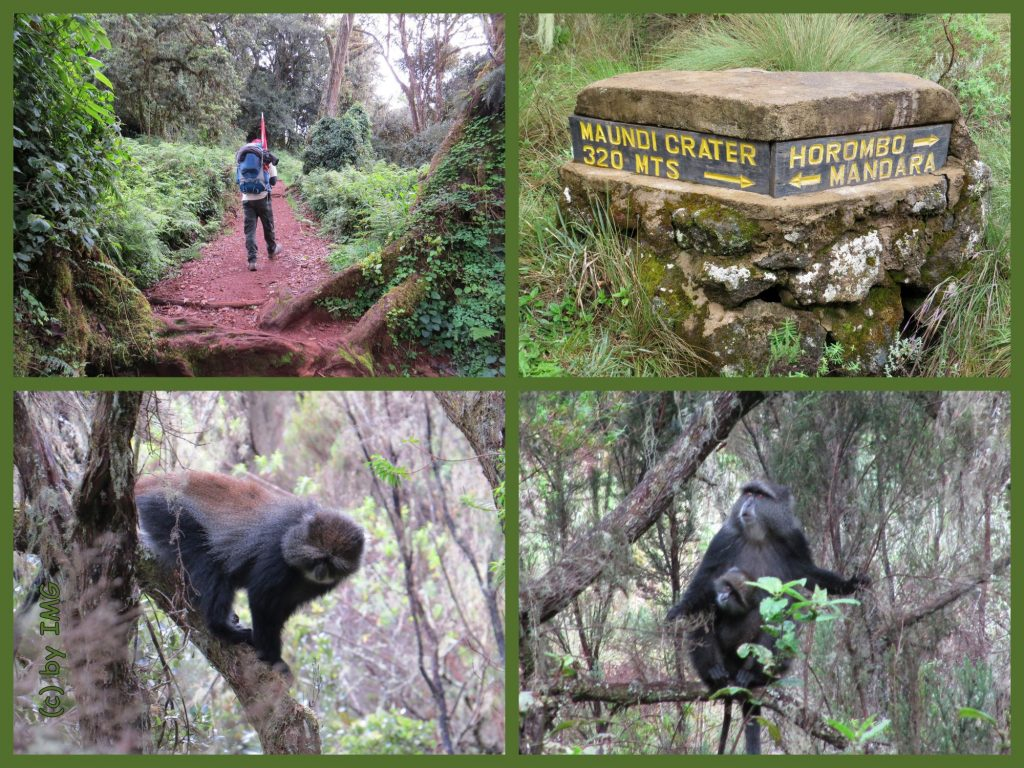 Mandara Horombo Kilimandscharo Kilimanjaro