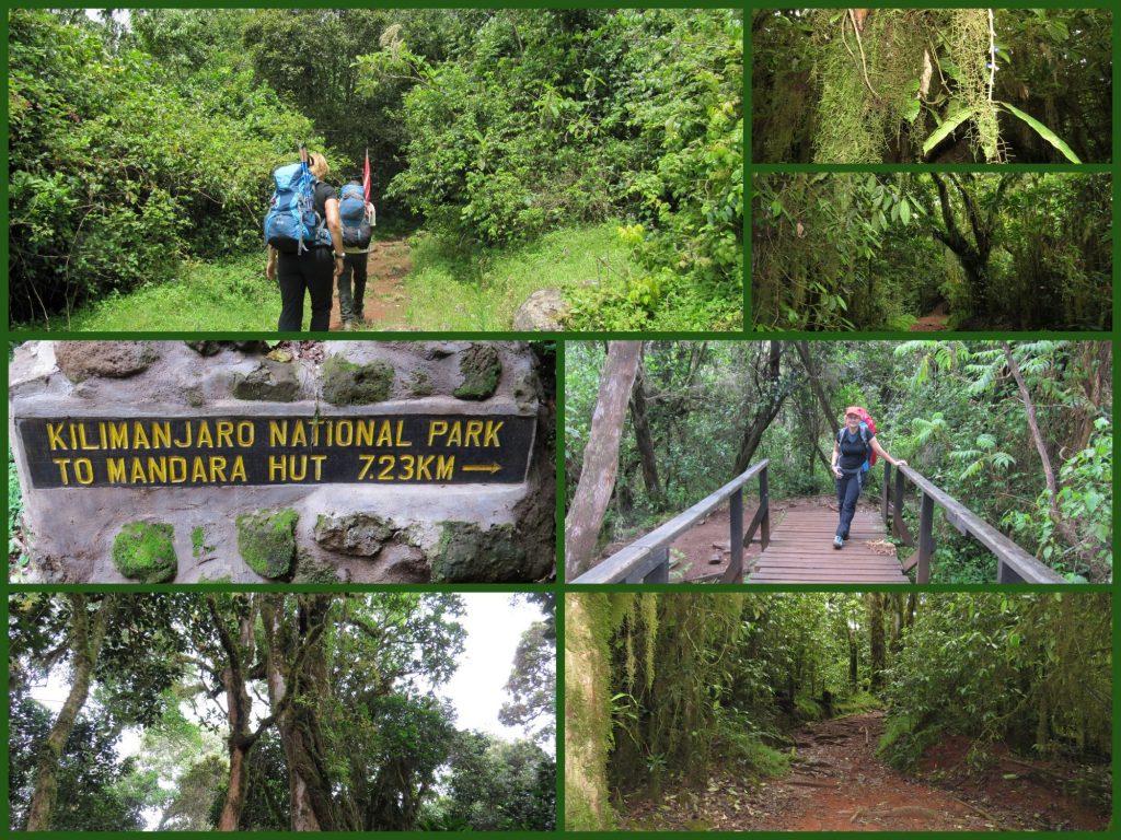 Mandara Hut Marangu Gate Kilimandscharo Kilimanjaro