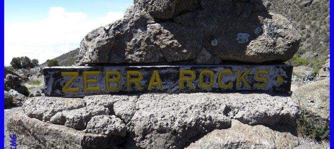 Kilimandscharo – Akklimatisierung bei einer Wanderung zum Zebra-Rock